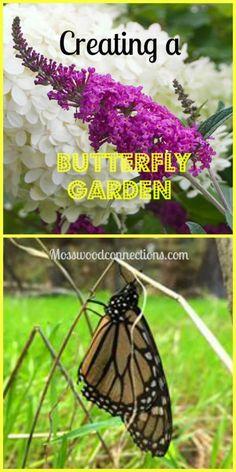 Creating a Butterfly Garden • Mosswood Connections - http://mosswoodconnections.com/creating-a-butterfly-garden/