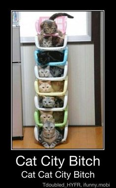 Dear Ashley Dudaaa, i saw this and it made me think of all your cat pictures(;