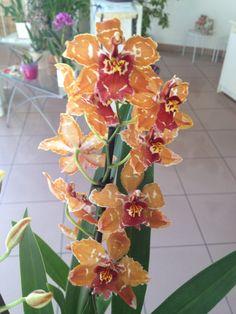 Orchidea arancione... Rara bellezza