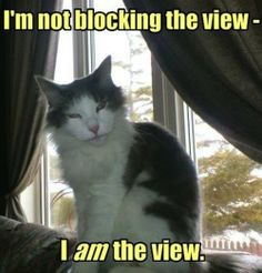 I'm not blocking the view. I am the view,,,