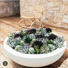 succulent garden care If you want something on your outdoor table which makes a statement, then a bowl full of succulents is a great place to start. They are so easy to create yourself. Now, succulents wont grow well.