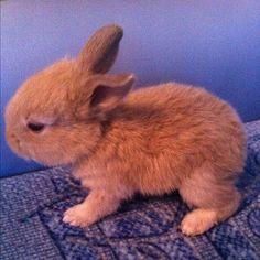 Cute 3-week bunny