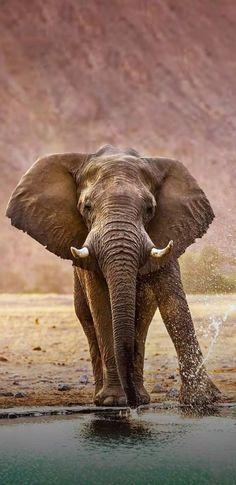 Safari Animals, Nature Animals, Animals And Pets, Funny Animals, Cute Animals, Elephant Love, Elephant Art, African Elephant, Elephant Photography