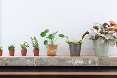 Wonderful houseplants: The Chinese Moneyplant - An Online Magazine - ALL ITEMS LOADED