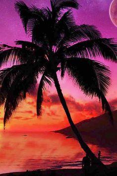 Palm tree at sunset image via WallpapersHD