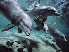 Dolphins know, and have names for each other. It certainly makes dolphin get togethers a lot easier.