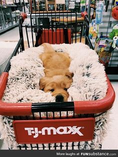 puppies sleeping through the night . puppies sleeping together . puppies sleeping in bed . Super Cute Puppies, Baby Animals Super Cute, Cute Little Puppies, Cute Little Animals, Cute Dogs And Puppies, Cute Funny Animals, Cute Babies, Doggies, Baby Dogs