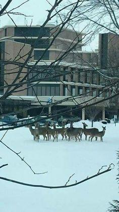 Oh, deer!! Visitors at Beloit Memorial Hospital! Feb.7,2015 Beloit, WI