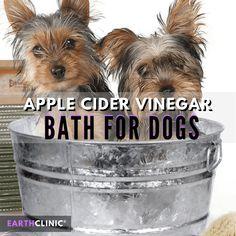 How to Give a Dog an Apple Cider Vinegar Bath - Earth Clinic® Apple Cider Vinegar Bath for Dogs Yorkies, Apple Cider Vinegar Dogs, Flea Bath For Dogs, Dog Itchy Skin Remedy, Dog Flea Remedies, Flea Remedy For Dogs, Allergy Remedies, Cold Remedies, Logo Image