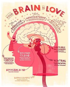 Happy Valentine's Day! Hope everybody gets their share of dopamine and oxytocin today. #lovefeelings #scientificliteracy #braininlove #brainfeels