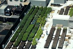 Hyperlocal: Tom Colicchio's Secret Farm, Right Next to the F.D.R. Drive #rooftop #garden