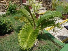 Plant Leaves, Flora, Plants, All Flowers, Nature, Flowering Plants, Palm Trees, Vegetable Gardening, Leaves