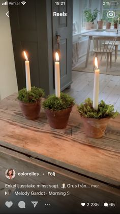 Melody Gardot, Dna, Plants, Plant, Planets, Gout