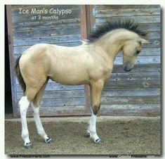 this horse is sooooooo pretty For Sale, buckskin Friesian cross filly by Ice Man… Baby Horses, Cute Horses, Horse Love, Wild Horses, Beautiful Horse Pictures, Beautiful Horses, Animals Beautiful, Cute Animals, Beautiful Babies