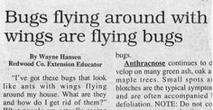 headlines-gone-wrong-funny-awful-28