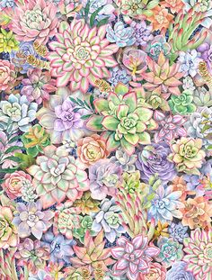 Pink Wallpaper Girly, Buy Succulents, Art Watercolor, Apple Watch Wallpaper, Johanna Basford Coloring Book, Alcohol Ink Crafts, Cactus Painting, Object Drawing, Plant Drawing