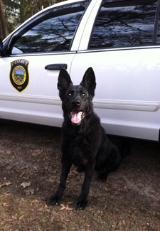 Help working dogs deal with retirement