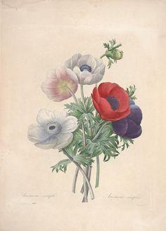 https://flic.kr/p/cXNXBy | n131_w1150 | Choix des plus belles fleurs :. Paris :Ernest Panckoucke,[1833?].. biodiversitylibrary.org/page/12695532