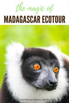 The Magic of Madagascar Ecotour: Lemurs and Other Wildlife New Dance Moves, Madagascar Travel, Vacation Is Over, Lemurs, Old Trees, Winter Trees, Africa Travel, Beach Trip, Travel Style