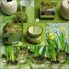 Growing a Pineapple in Water From a Pineapple Top | Gardening world | Bloglovin'