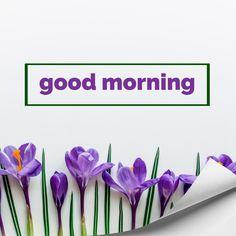 Good Morning Thursday Images, Good Morning Saturday, Cute Good Morning, Good Morning Picture, Good Morning Flowers, Good Morning Greetings, Morning Pictures, Good Morning Wishes, Happy Birthday Son