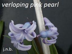 mutant uit pink pearl