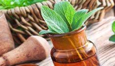 De 15 beste geneeskrachtige kruiden