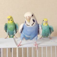 ☆★☆parakeet.... This looks like a 90's boy-band album cover :-)