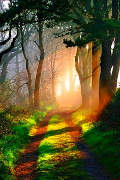 I want to get lost in the forest