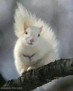 Albiino orav
