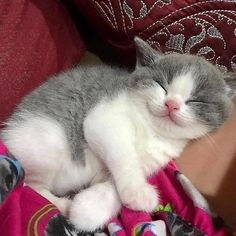 Look at that little smile!💓😘 From @mochicat168 Notification ON 💙 #cuteanimals #catoftheday #catlover #cat_features #catlady #cateye… #catsandkittens