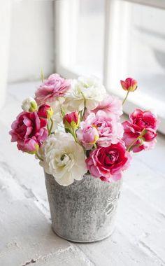 Ranunkeln Ranunkel als Schnittblume Ranunculus as a Little Flowers, Faux Flowers, My Flower, Fresh Flowers, Flower Pots, Beautiful Flowers, Flower Pot Design, Fleurs Diy, Diy Décoration