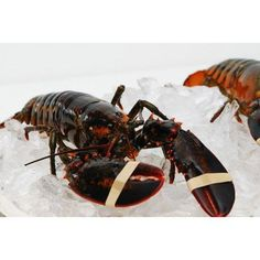 Live New England Lobster 1.25 lb avg , 10 lb case, approximately 8 Lobsters