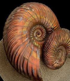 Ammonites become Ammolites with iridescent/colorful surfaces Minerals And Gemstones, Rocks And Minerals, Instalation Art, 3d Figures, Beautiful Rocks, Rocks And Gems, Ammonite, Sea Creatures, Prehistoric