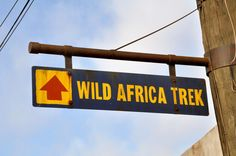 Wild Africa Trek, Animal Kingdom, Disney World: expensive but so worth it. Participants wear safety vests and harnesses when crossing the two suspension bridges and hanging over crocodiles and hippos.
