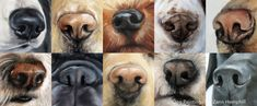 dog paintings Drawing and Painting Dog Noses Animal Paintings, Animal Drawings, Nose Drawing, Dog Nose, Wildlife Art, Dog Portraits, Dog Art, Painting & Drawing, 3d Triangle