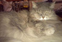 愛猫さくら姫 SHOOP+FACTORY(シュープ・ファクトリー)@オーナーブログ-129ページ目