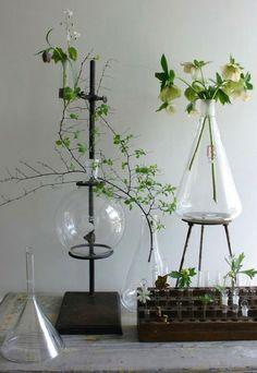 plants - chemical