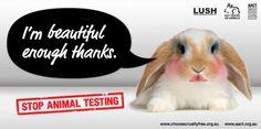 We don't need animal testing to feel beautiful says the cute bunny. ICS