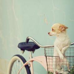 puppy in a bike basket photo by Mandy Lynne
