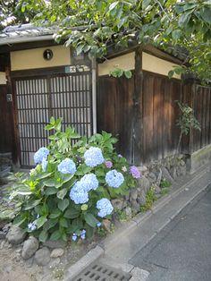 Ajisai (Japanese hydrangea)  blooms in June. あじさいに出会う辻 @Veronique van Oorschot van Oorschot Sans Kato
