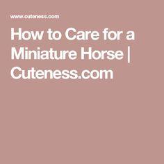 How to Care for a Miniature Horse | Cuteness.com