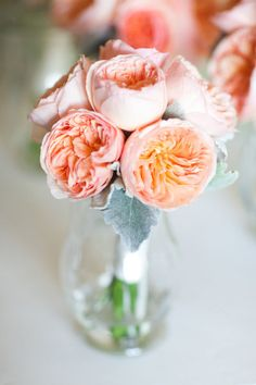 Bride Bouquet -- Juliet peach garden roses but add in white peonies and with dusty miller leaves..