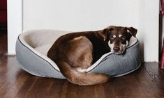 7 Dog Commands to Teach Your New Dog That Are Not Sit, Down, and Stay #teachdogtocome