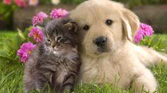 I cani vivono con te, i gatti sono a pensione da te.  Pam Brown