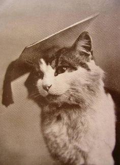 Vintage cat wearing mortar board