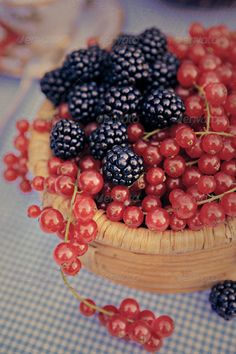 Realistic Graphic DOWNLOAD (.ai, .psd) :: http://jquery-css.de/pinterest-itmid-1006776108i.html ... raspberries and redcurrants ...  Redcurrants, backgrounds, backyard, berry, eating, fall, food, freshness, fruit, garden, healthy, raspberry, red, table  ... Realistic Photo Graphic Print Obejct Business Web Elements Illustration Design Templates ... DOWNLOAD :: http://jquery-css.de/pinterest-itmid-1006776108i.html