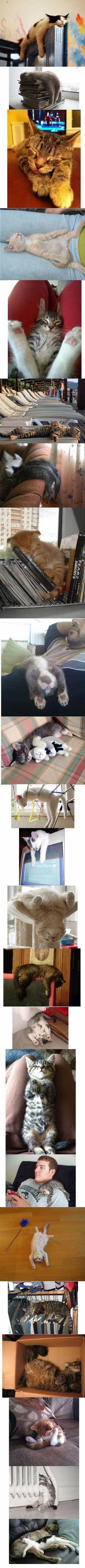 Schläfrige Katzen, so süüüß