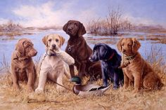 Labrador and Golden Retriever Puppies Painted by Jim Killen 42