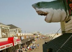 Hotels on the Waterfront of Ocean City, Maryland